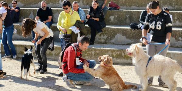 Festa del gos 2017